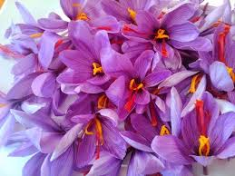 پخش عمده عصاره زعفران