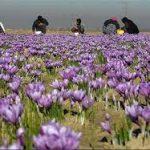 فروشگاه اینترنتی عصاره زعفران