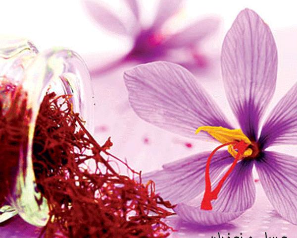 پودر عصاره زعفران مایع