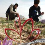 عصاره زعفران سراج اصل ایرانی