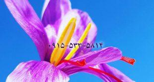 صادرات عصاره زعفران سراج تضمینی