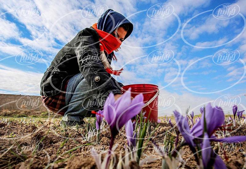 قیمت زعفران امروز در مناطق مختلف خراسان