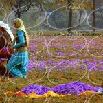 شرکت افشانه زعفران زرافشان 110 میلی لیتری