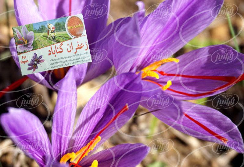 قیمت امروز زعفران گناباد در سراسر کشور
