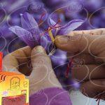 خرید چاشنی حاوی عصاره زعفران ۴۰ گرمی گلستان